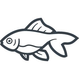 金魚の無料アイコン素材 3 商用可の無料 フリー のアイコン素材をダウンロードできるサイト Icon Rainbow